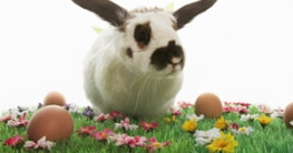 Angebote zu Ostern